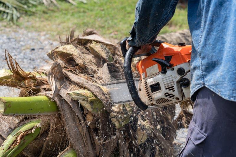 O homem corta a árvore do felling da árvore com serra de cadeia Árvore do corte da ocupação foto de stock royalty free