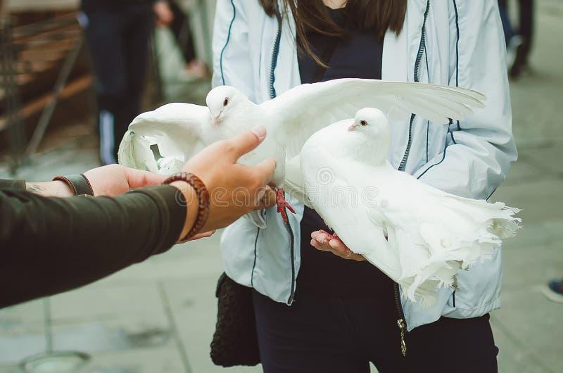 O homem dá à menina duas pombas brancas em seus braços Entretenimento para turistas na cidade de St Petersburg imagens de stock royalty free