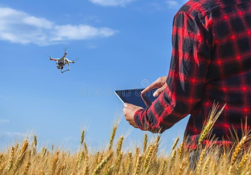 O homem de negócios está em um campo do trigo maduro está guardando um tablet pc e controla o quadcopter fotos de stock royalty free