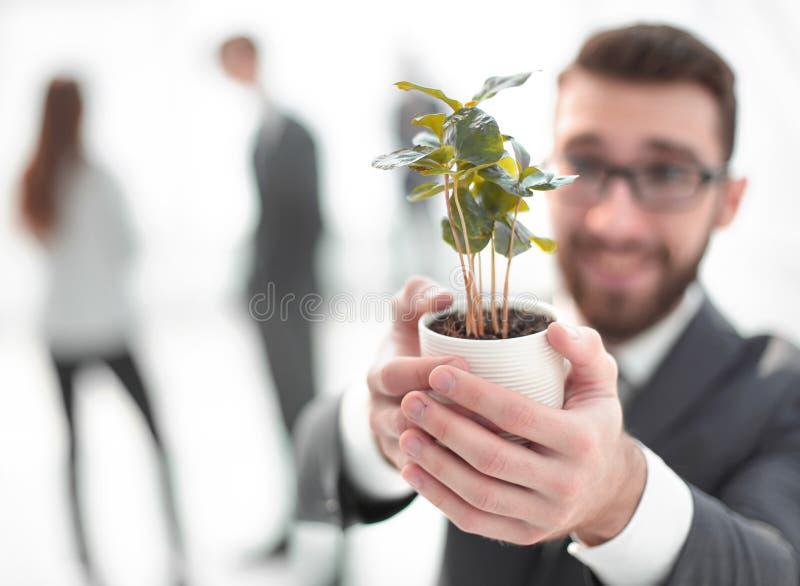 O homem de neg?cios de sorriso mostra o broto verde dos jovens fotos de stock royalty free
