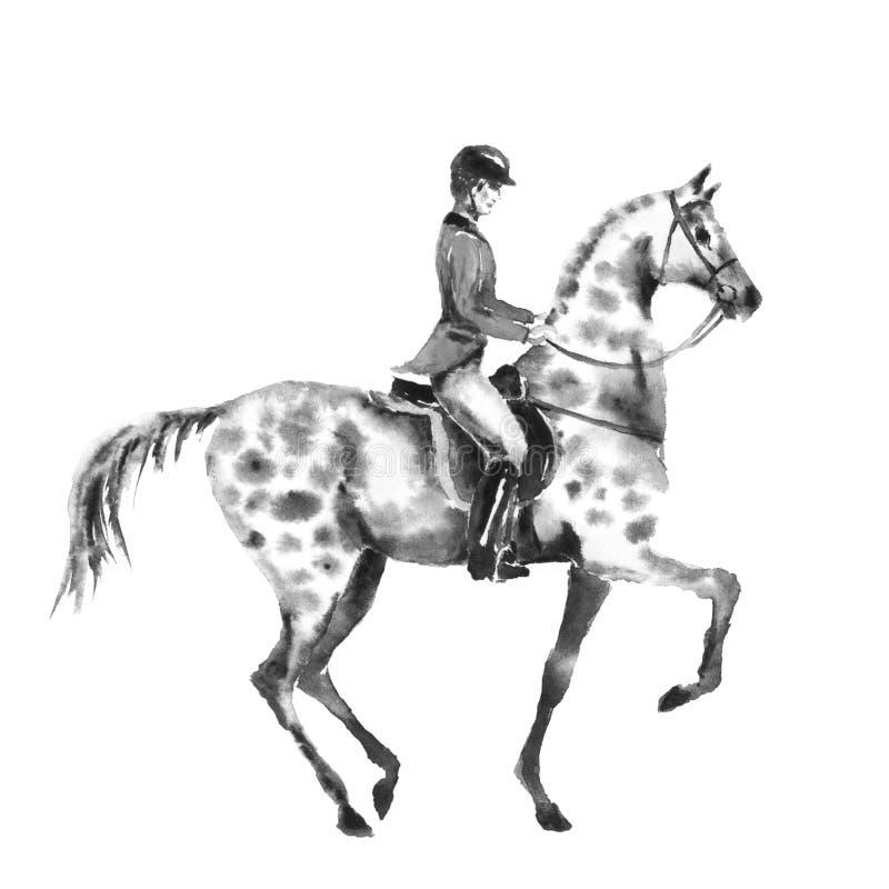 O homem do cavaleiro de Horseback e dapple o cavalo cinzento Ilustração monocromática preto e branco do desenho da mão da aquarel ilustração royalty free