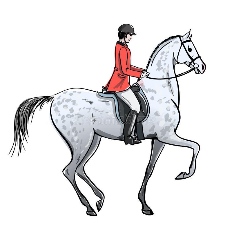 O homem do cavaleiro e dapple o cavalo cinzento no branco Cavaleiro no revestimento vermelho no garanhão ilustração stock