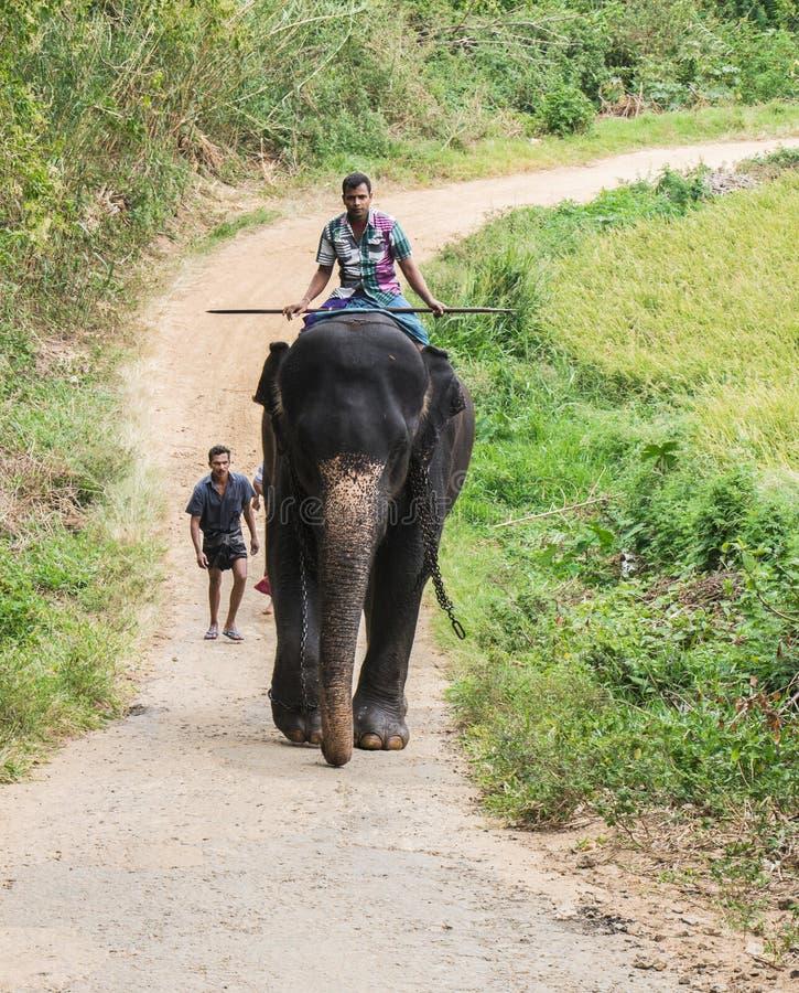 O homem do elefante cingalês fotografia de stock