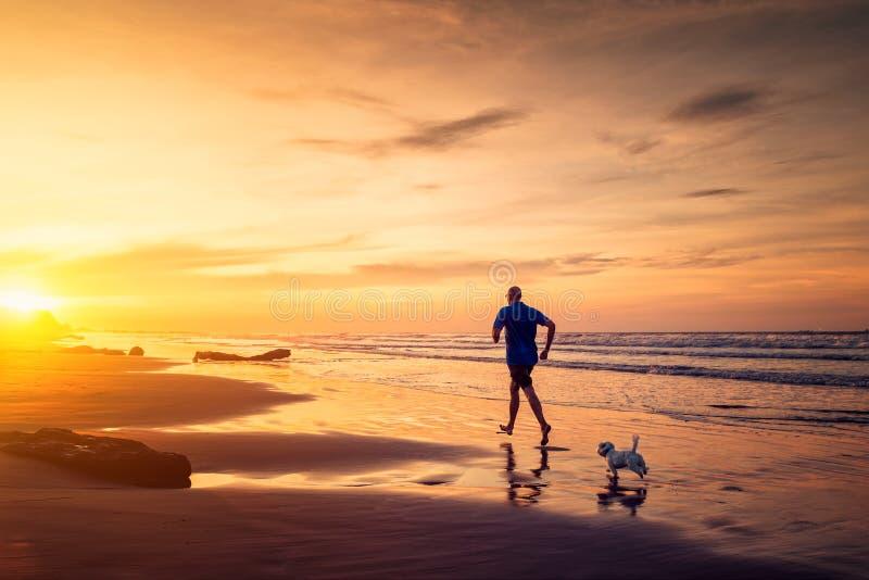 O homem e o cão pequeno estão correndo na praia no tempo do por do sol imagens de stock royalty free
