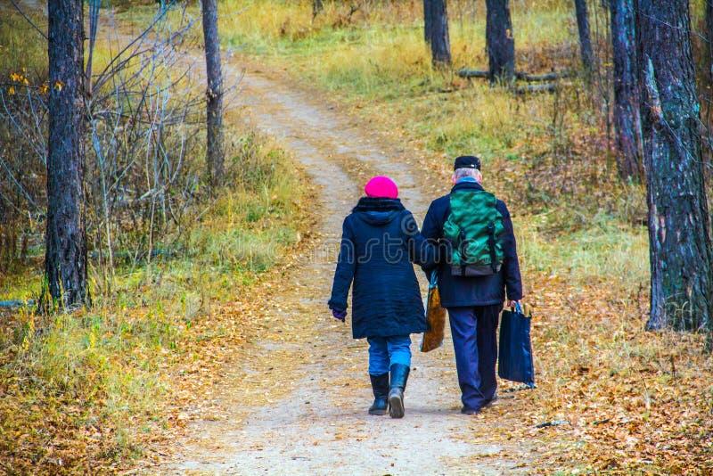 O homem e a mulher idosos estão andando ao longo do trajeto entre as árvores através da floresta no outono imagem de stock