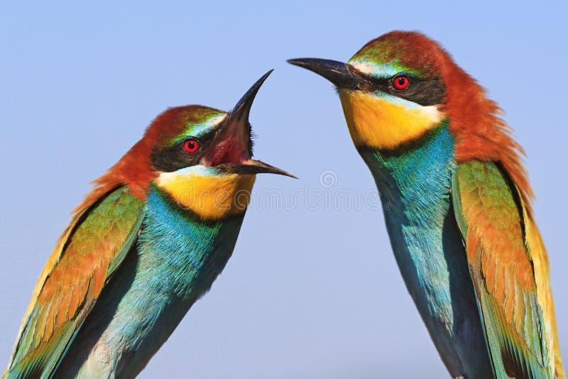 O homem e a mulher juram, pássaros da discussão da família imagens de stock royalty free