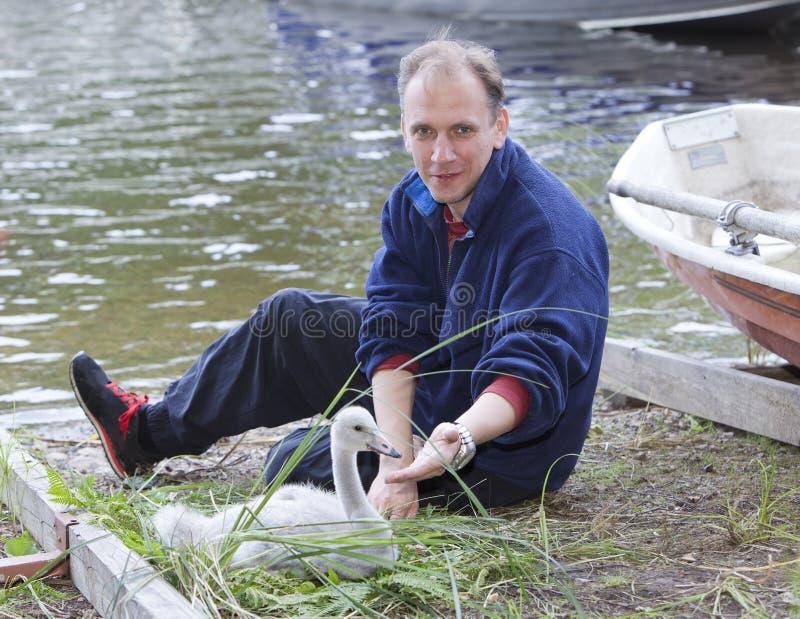 O homem e uma cisne nova no lago em terra fotografia de stock