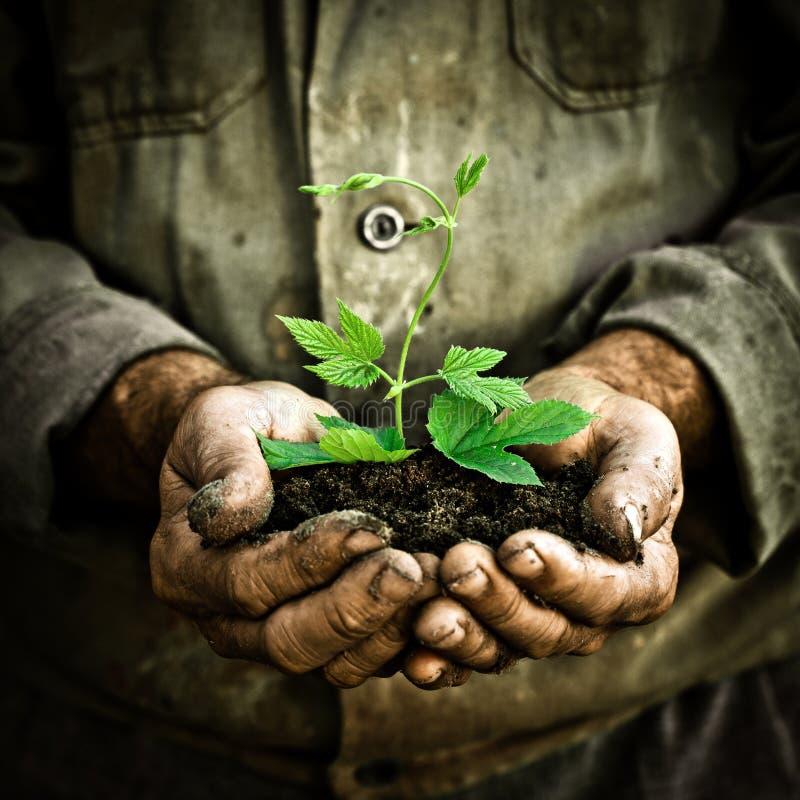 O homem entrega prender uma planta nova verde imagens de stock royalty free