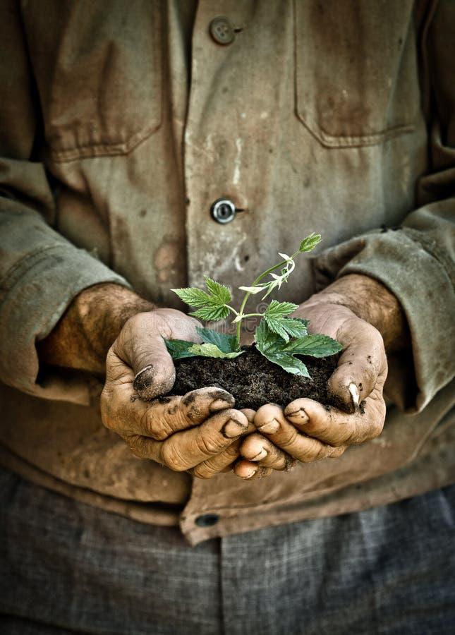 O homem entrega prender uma planta nova verde foto de stock royalty free