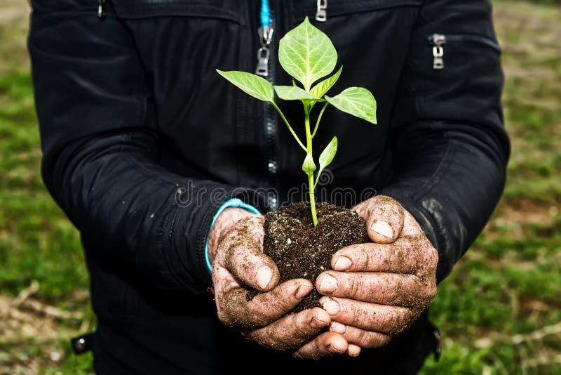 O homem entrega prender uma planta nova verde Símbolo da mola e do ecol imagem de stock royalty free