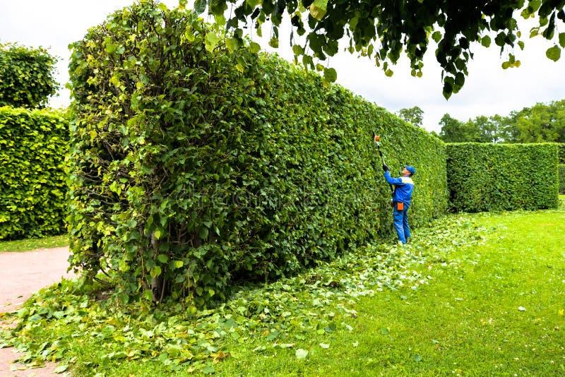 O homem está cortando árvores no parque Jardineiro profissional no arbustos uniformes dos cortes com tosquiadeiras Jardim de poda fotografia de stock