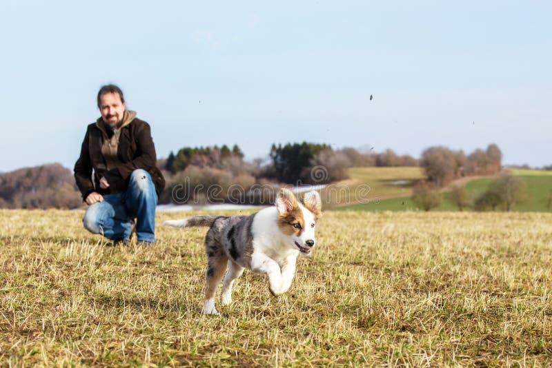 O homem está jogando com seu meio cão de cachorrinho da raça fotografia de stock royalty free