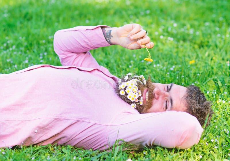 O homem farpado com as flores da margarida na barba coloca no grassplot, fundo da grama Alergia e conceito do antistam?nico Homem imagem de stock royalty free