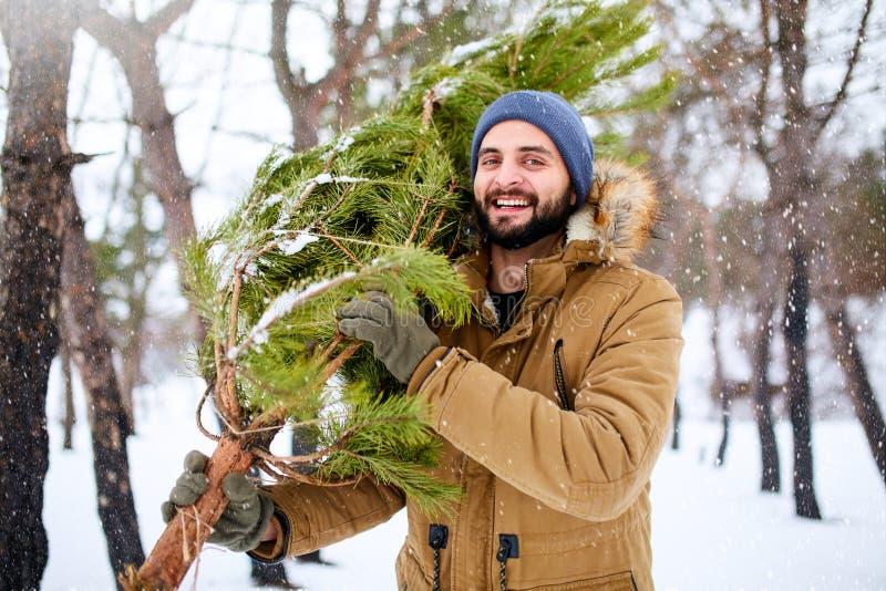 O homem farpado que leva a árvore de Natal recentemente reduzida no lenhador novo da floresta carrega a árvore de abeto em seu om imagem de stock