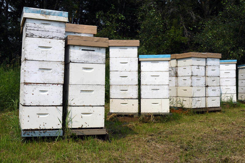 O homem fez Honey Bee Hives imagem de stock royalty free