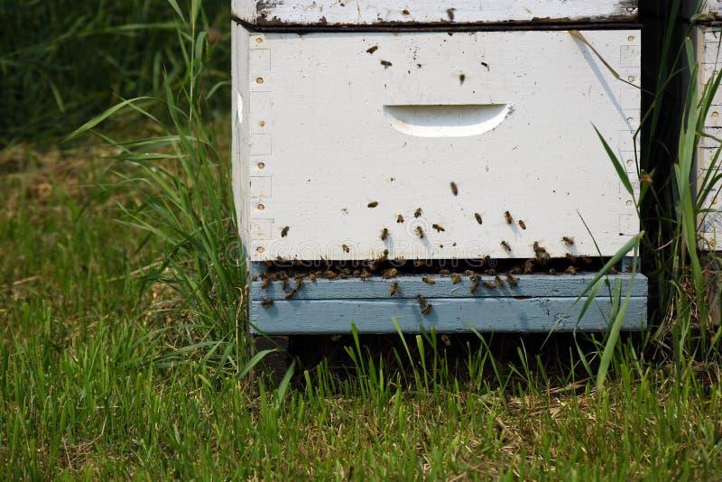 O homem fez Honey Bee Hives fotografia de stock