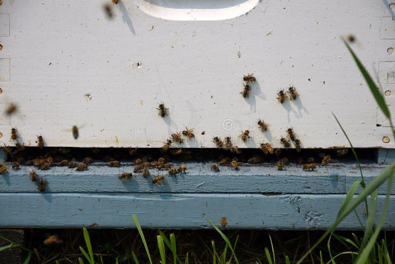 O homem fez Honey Bee Hives imagens de stock