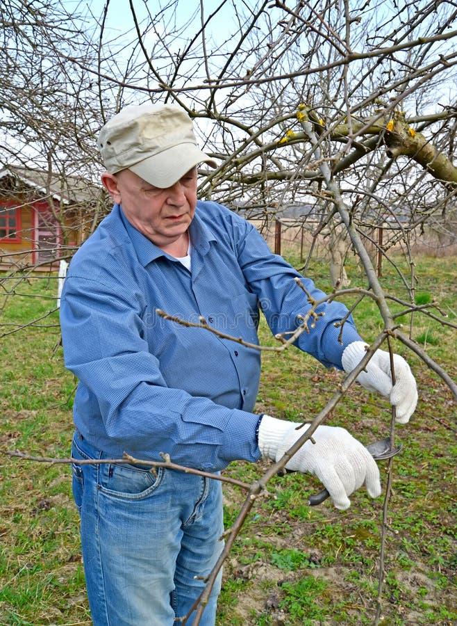 O homem idoso corta ramos da Apple-?rvore com secateurs A mola funciona em um jardim fotos de stock royalty free