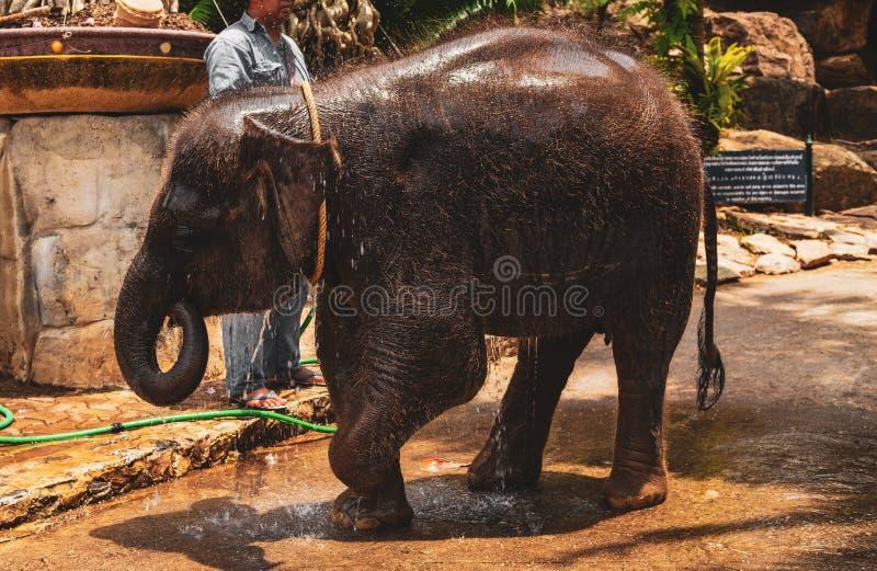 O homem lava um elefante pequeno fotos de stock
