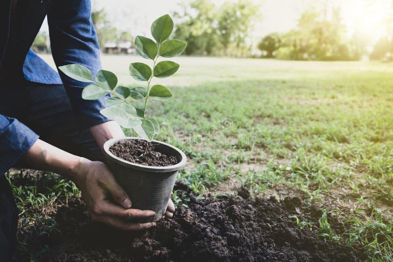 O homem novo está plantando a árvore para preservar o ambiente fotografia de stock