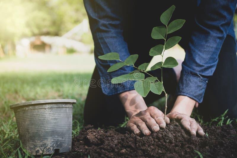 O homem novo está plantando a árvore para preservar o ambiente foto de stock