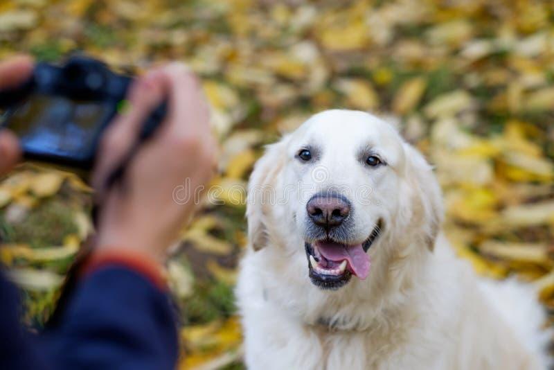 O homem novo faz a foto do golden retriever com photocamera fotos de stock royalty free