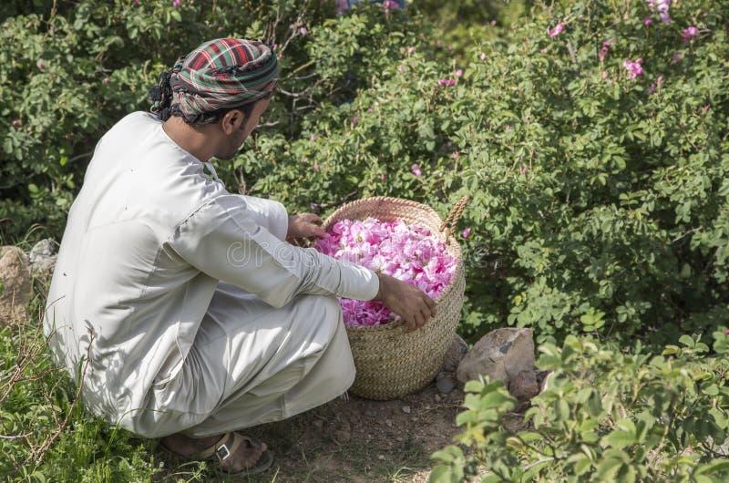 O homem omanense com as pétalas cor-de-rosa a fazer aumentou a água que é usada como a medicina tradicional; cosméticos; ingredie fotografia de stock