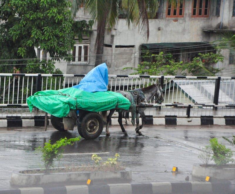 O homem que monta um carro do cavalo salvar e seus bens da obtenção molhado pela chuva com uma folha plástica foto de stock
