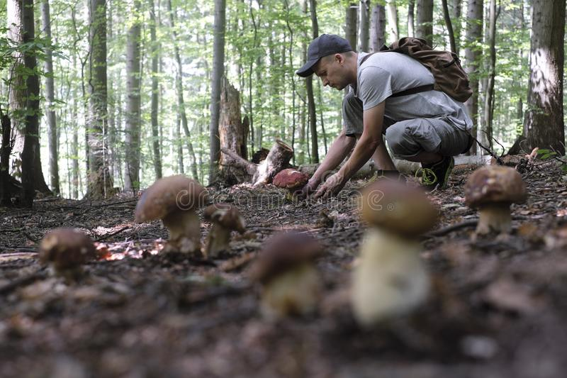 O homem recolhe cogumelos fotografia de stock