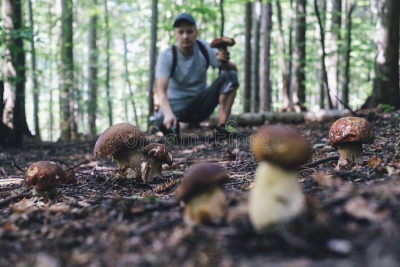 O homem recolhe cogumelos foto de stock