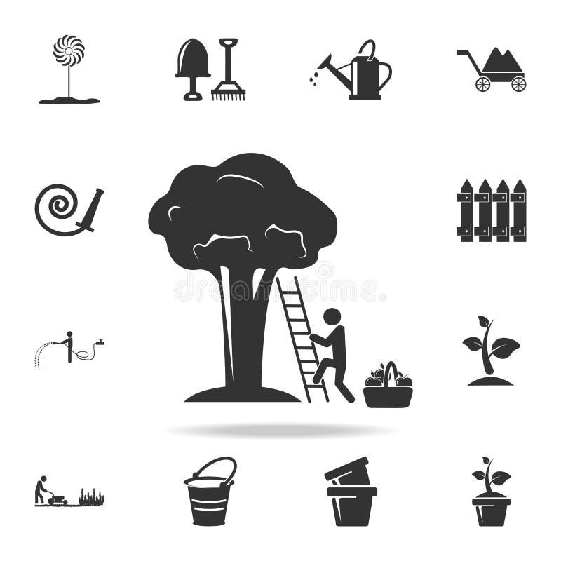 o homem recolhe o fruto de um ícone da árvore Grupo detalhado de ferramentas de jardim e de ícones da agricultura Projeto gráfico ilustração stock