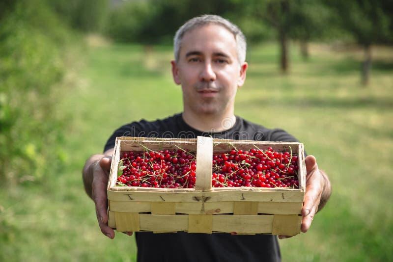 O homem sorri e guarda a cesta com corintos vermelhos imagem de stock