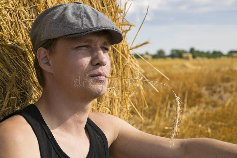 O Homem Zumbido Perto Da Esfera Do Centeio Faz Pensamentos Foto de Stock Royalty Free