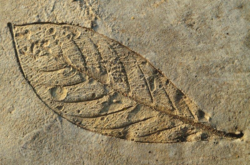 O Imprint as folhas no cimento pavimenta fotos de stock