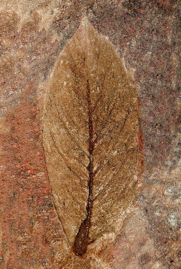 O Imprint da folha fotografia de stock