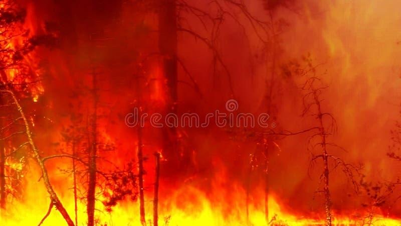 O incêndio florestal é forte fotografia de stock royalty free