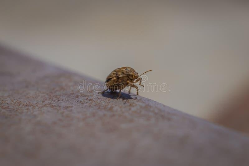o inseto anda em vez das moscas imagem de stock royalty free