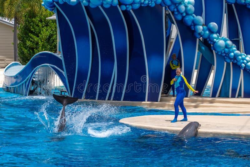 O instrutor da mulher que dá sentidos aos golfinhos em dias do golfinho mostra em Seaworld imagens de stock