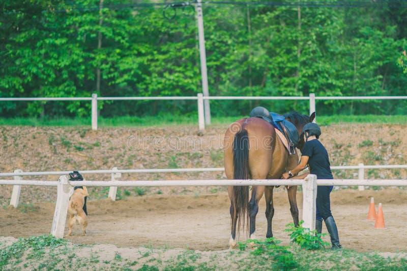 O instrutor fêmea está treinando o cavalo novo para o doméstico em r foto de stock