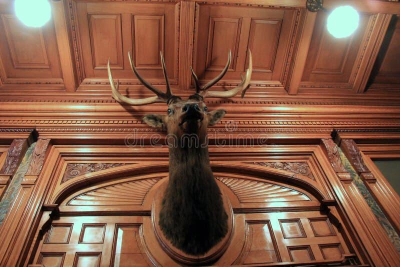 O interior impressionante com obscuridade cinzelou paredes, tetos e a cabeça animal, Richardson Bates House Museum histórico, Osw fotos de stock