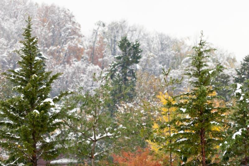 O inverno chega cedo fotos de stock royalty free