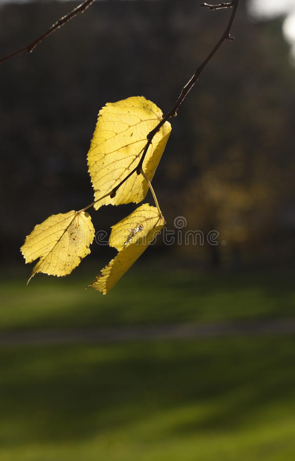 O inverno Sun molda sombras longas fotografia de stock