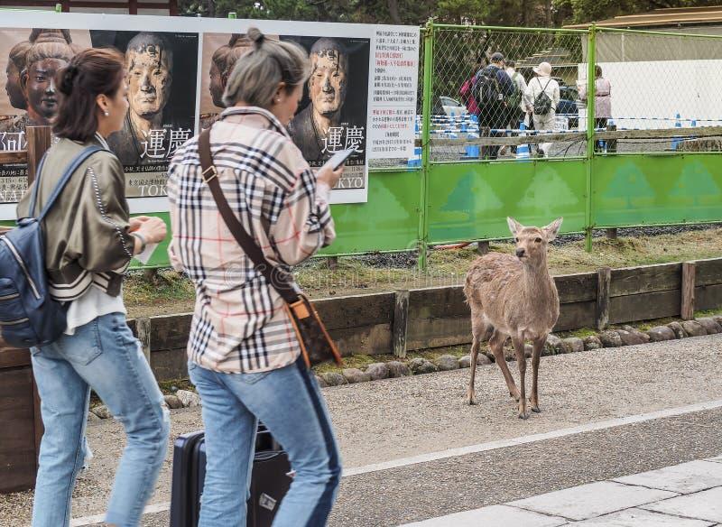 O ` japonês de espera de Senbei do ` dos biscoitos dos cervos dos turistas imagem de stock