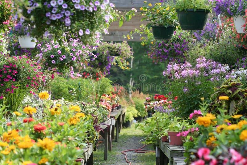 O jardim imagem de stock royalty free