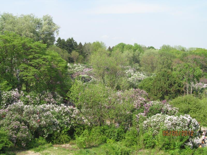 O jardim botânico na mola imagens de stock royalty free
