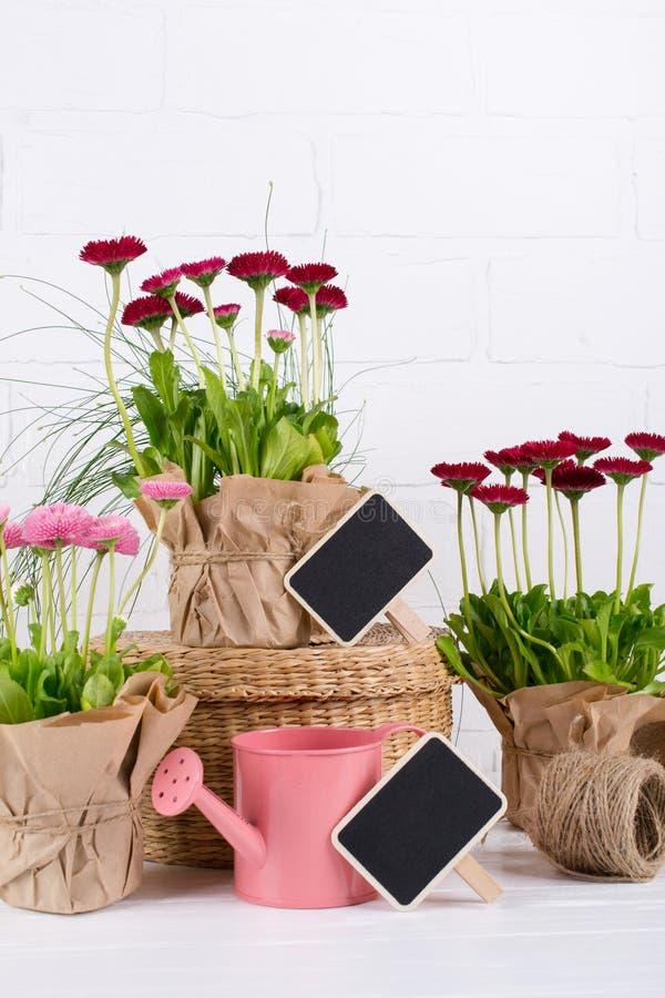O jardim da mola trabalha o conceito Ferramentas de jardinagem, flores em uns potenciômetros e lata molhando na tabela de madeira imagens de stock