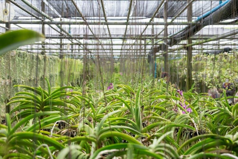 O jardim da orquídea arranja obscuro fotografia de stock
