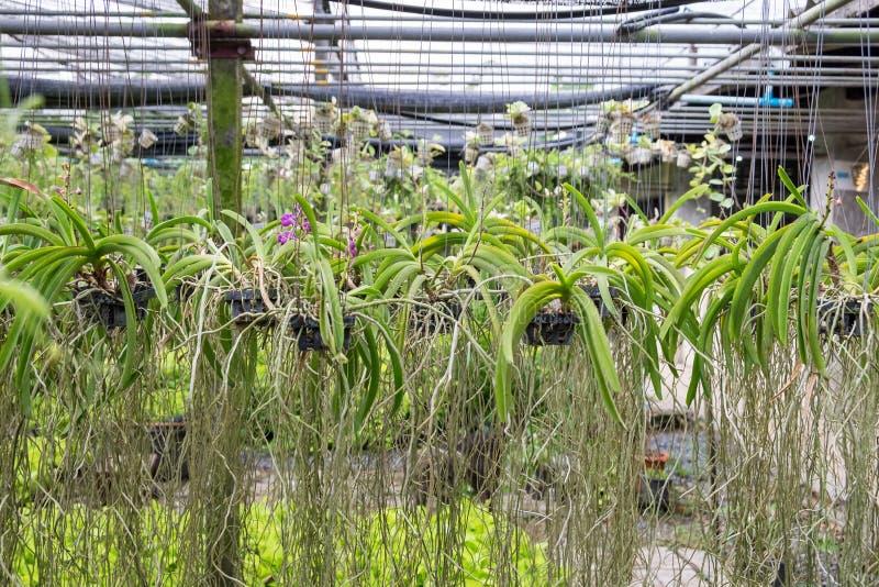 O jardim da orquídea arranja obscuro imagens de stock royalty free