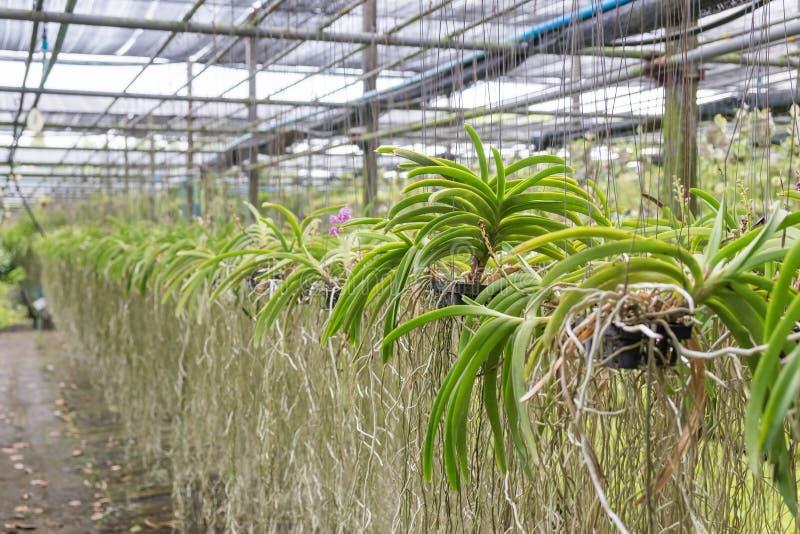 O jardim da orquídea arranja obscuro foto de stock royalty free