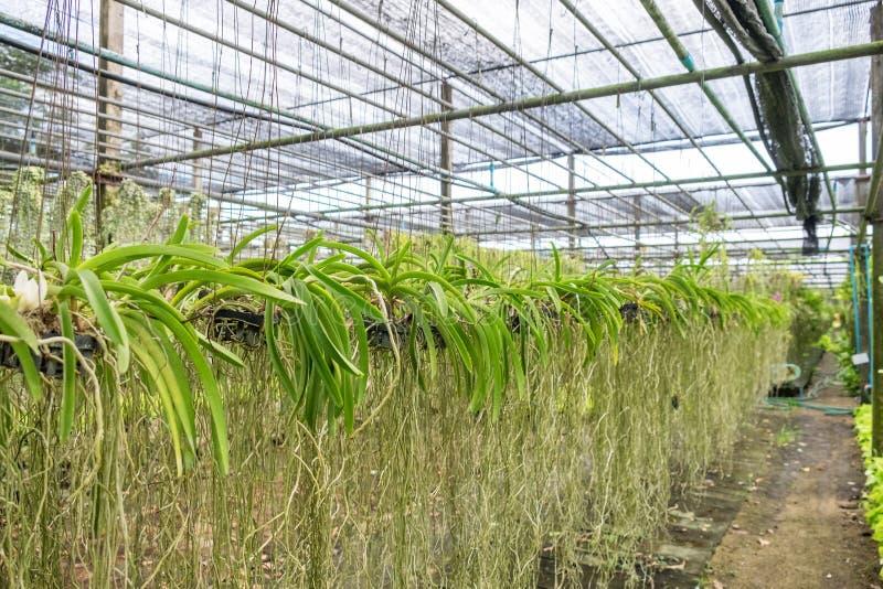 O jardim da orquídea arranja obscuro foto de stock